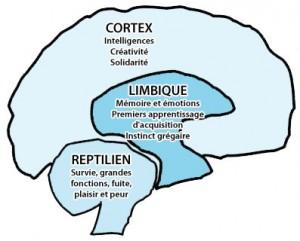 Cerveau consommation et impulsion d'achat