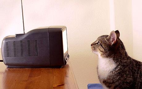 vivre sans television chat
